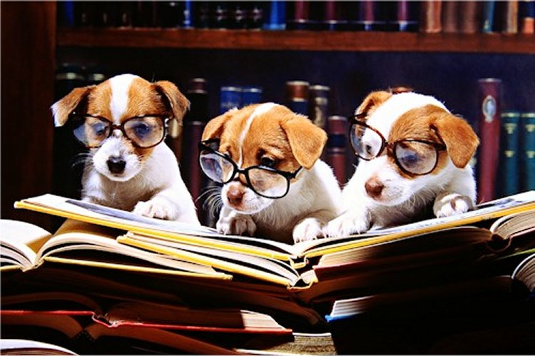 25 Dogs That Love Reading |Puppy Reading